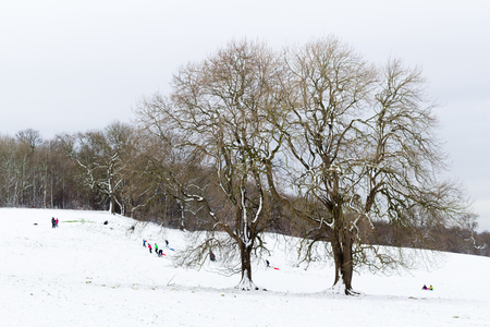 sledging people: people sledging in the snow, surrounded by trees. Stock Photo