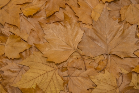 Brown Leafs Stock Photo