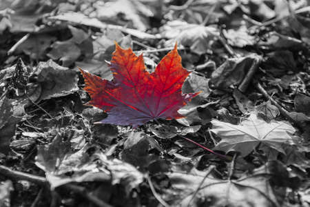 A red leaf on the ground Stock Photo