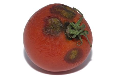 mouldy: Close Up Of Moldy Tomato On White Background