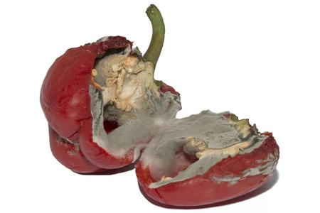 Moldy Red Bell Pepper Isolated On White