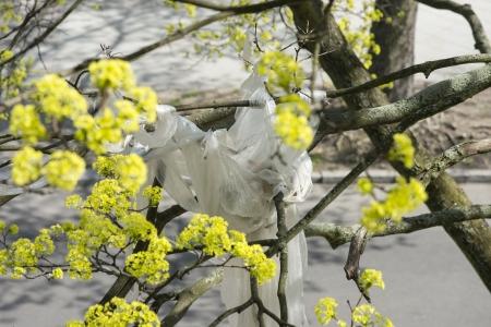 Pollution Plastic Foil In Maple Tree