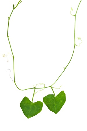 Nature heart necklace photo