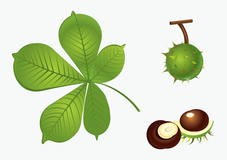 Chestnut set Stock Vector - 8559506