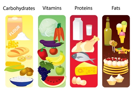 protein: Food concept