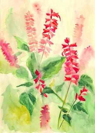 etude: Summer flowers