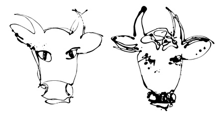 Artistic isolated portraits of the cow