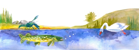 pike: Watercolour hand-made illustration to folk tale about swan, pike and crawlfish