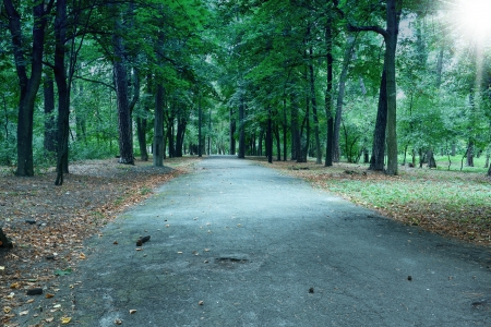 Forest landscape with path in summer Stock Photo