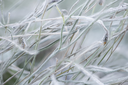 Close up of grass covered with the frost