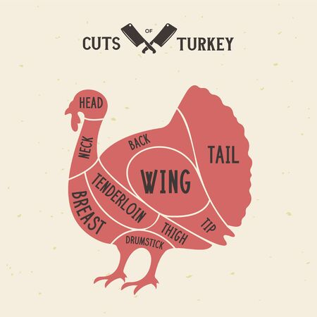 Meat cuts - turkey. Diagrams for butcher shop. Scheme of turkey. Animal silhouette turkey. Guide for cutting. Vintage vector illustration. Illustration
