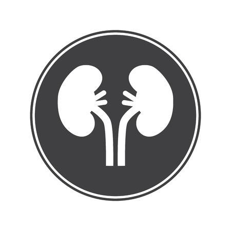 kidneys: Human kidneys icon
