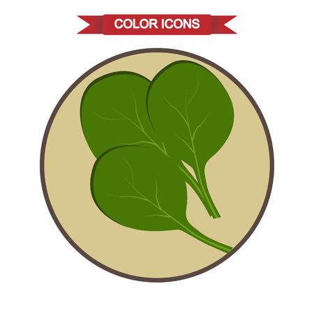 spinach: Spinach leaves icon