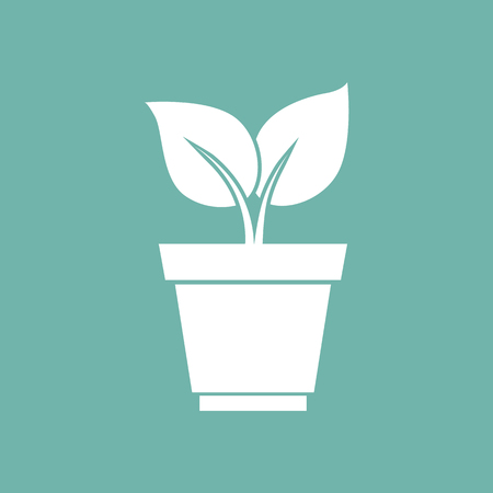 cultivation: Plant in pot icon