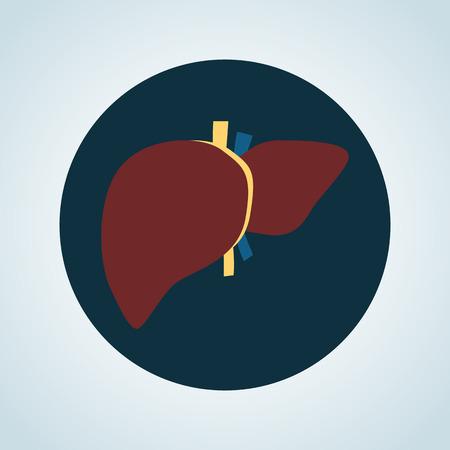 human liver: Human liver color icon