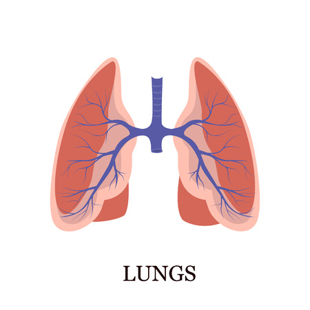 Human lungs color flat icon Illustration