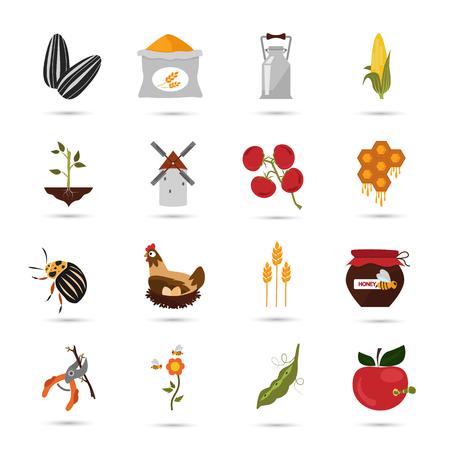 wheat grain: Agriculture color set icons