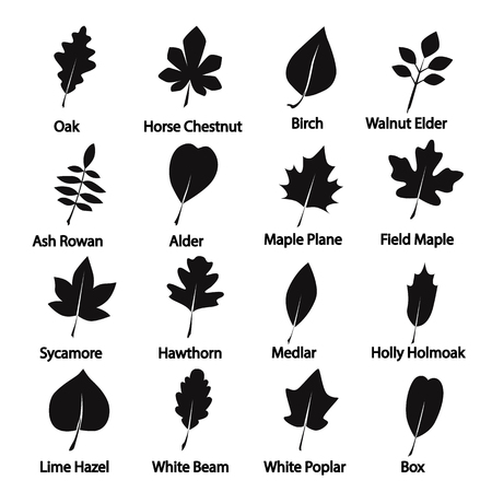 Set of tree leaves icon
