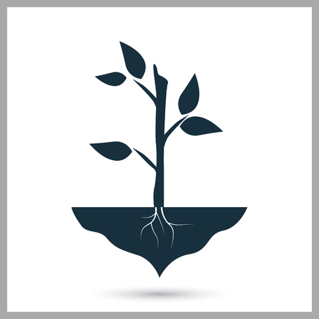 growing plant: Growing plant icon on the background