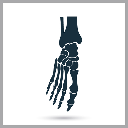 bones of the foot: Foot bones icon on the background