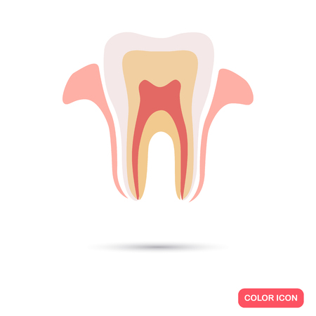 the section: Human tooth section color flat icon Illustration