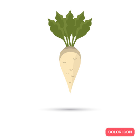 Sugar beet agriculture crop. Color flat icon Illustration