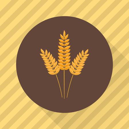 cultivo de trigo: Oídos de los cultivos de trigo agricultura. icono de color plana