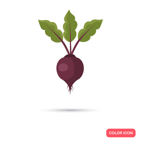 Beet agriculture crop. Color flat icon