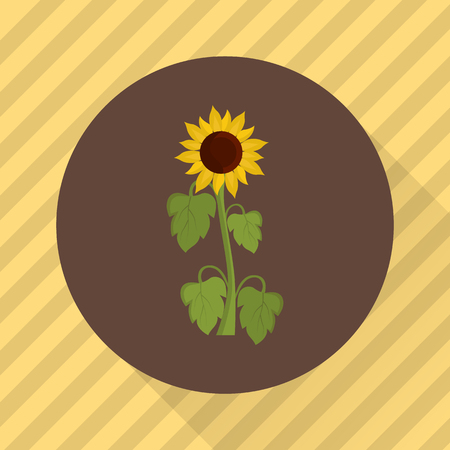 oil crops: Sunflower agriculture crop. Color flat icon