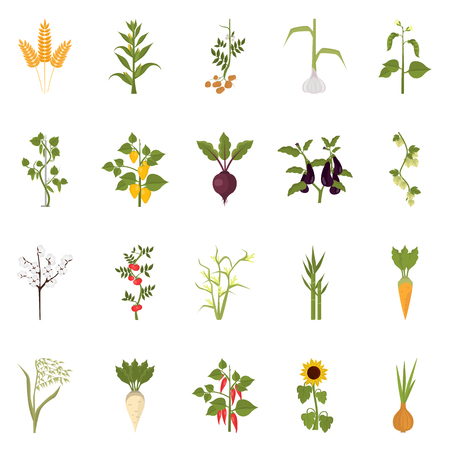 Agriculture crops color flat icons set