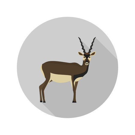 horned: Horned antelope color flat icon for web and mobile design Illustration