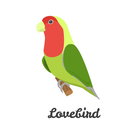 lovebird: Lovebird color flat icon for web and mobile design Illustration