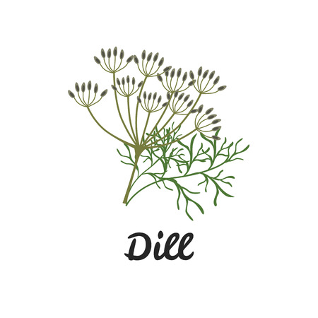Dill color flat icon for web and mobile design Illustration