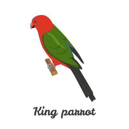 king parrot: King parrot color flat icon for web and mobile design Illustration