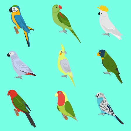 lovebird: Set of color flat parrots icons Illustration