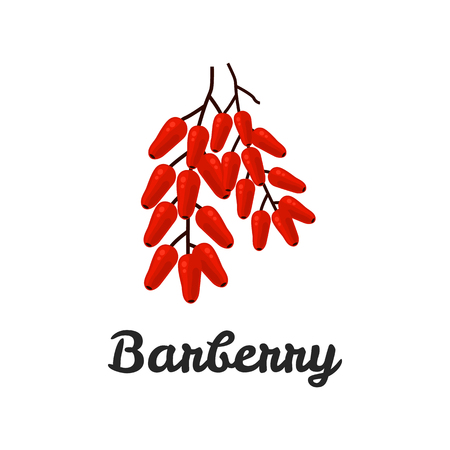 flavor: Barberry color flat icon for web and mobile design Illustration