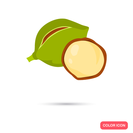 Macadamia nut color icons in cartoon design