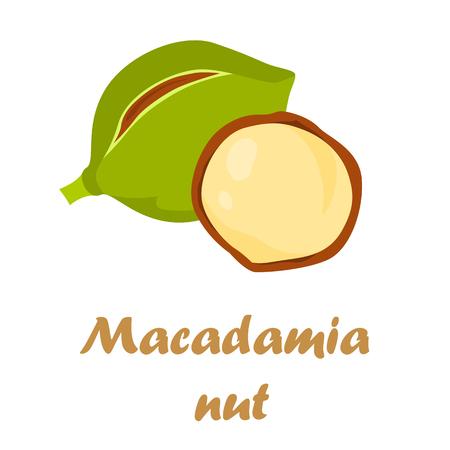 albero nocciolo: Icona a forma di noce macadamia nel design dei cartoni animati Vettoriali