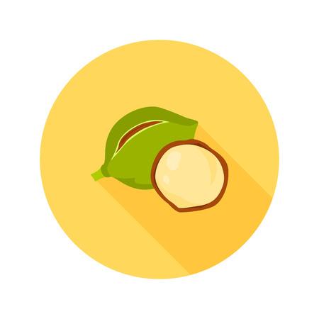 Macadamia nut color icon in cartoon design