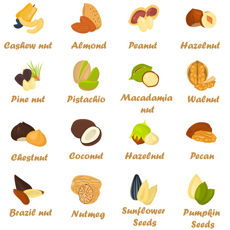 brazil nut: Set of color nuts icons in cartoon design Illustration