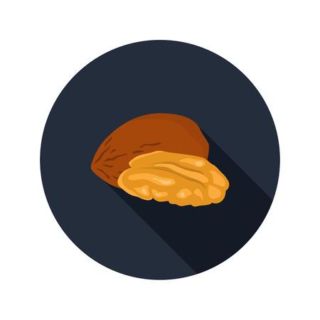 pecan: Pecan nut color icon in cartoon design