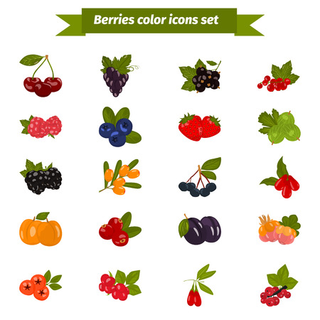 mountain ash: Set of color berries icons in cartoon style for web and mobile design Illustration