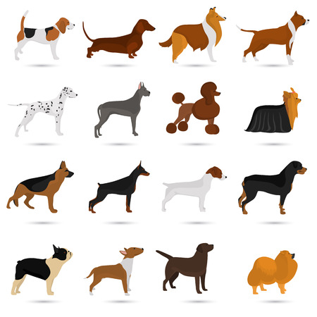 labrador: Seth of different breeds of dogs color flat icon s for web and mobile design. Illustration