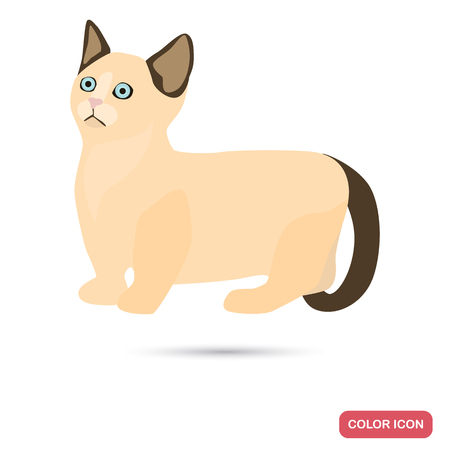 Munchkin cat breed color flat icon for web and mobile design
