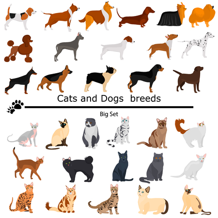 Dogs and cats set color flat icons for web and moile design