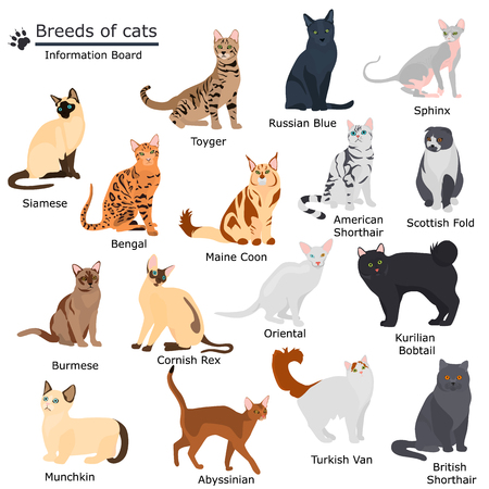 Set of cats breeds color flat icons for web and mobile design
