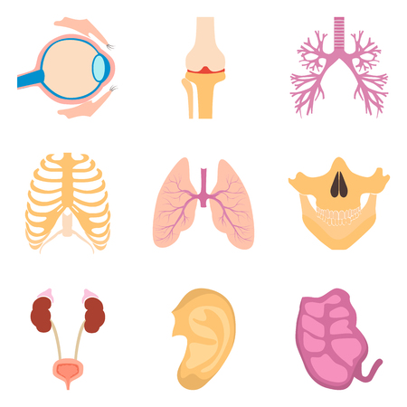 Human organs color icons set for web and mobile design