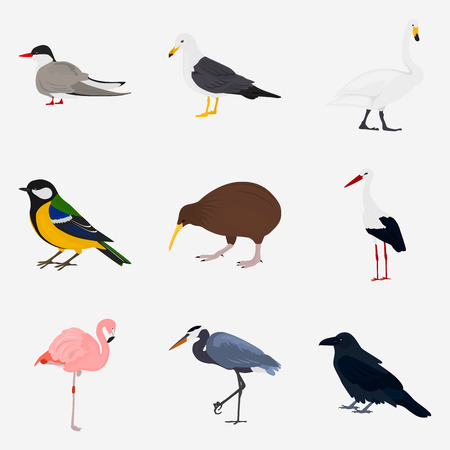 Set of different birds color flat icon for web and mobile design Illustration