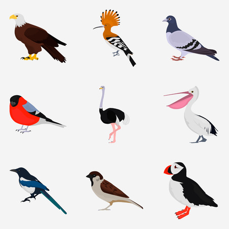 Set of different birds color flat icon for web and mobile design Çizim