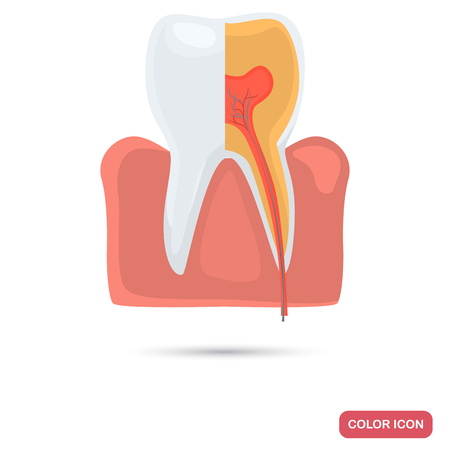 Tooth in a cut color flat icon for web and mobile design